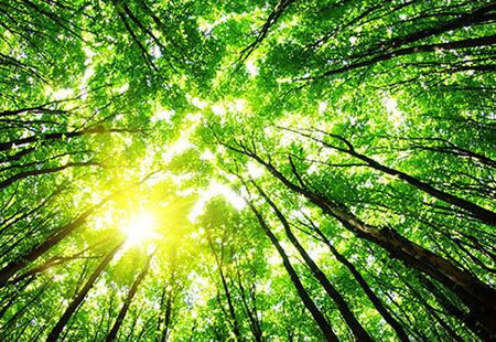 Sol a través de árboles